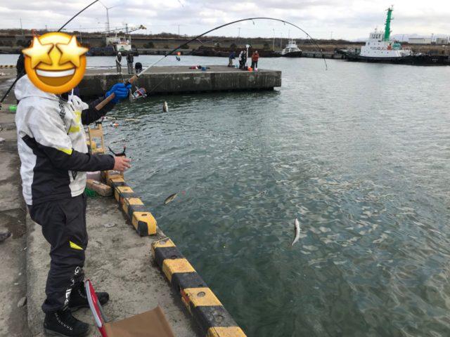 石狩東埠頭でホッケが釣れまくり!