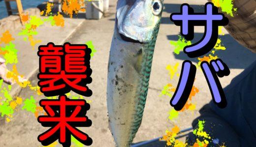 【サバ襲来!!】石狩新港樽川埠頭で絶対サバを釣る方法。