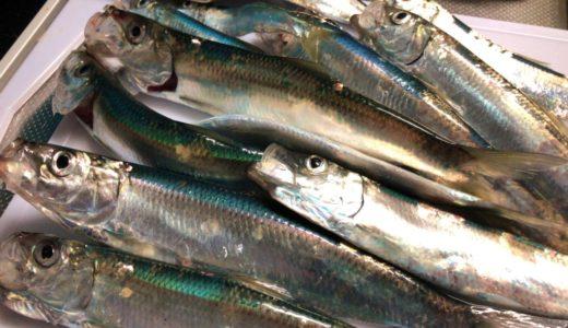 【ニシン大漁!】しかし石狩東埠頭の釣り場が大変なことに・・・